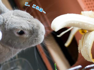 バナナを食べるうさぎ1