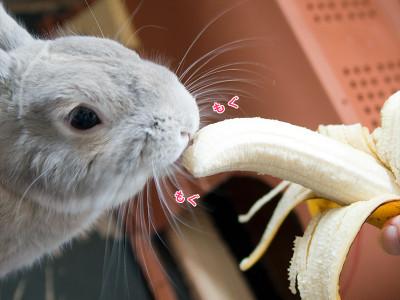 バナナを食べるうさぎ5